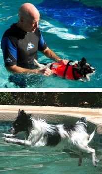 Canine Physical Therapy, www caninerehab com Testimonials